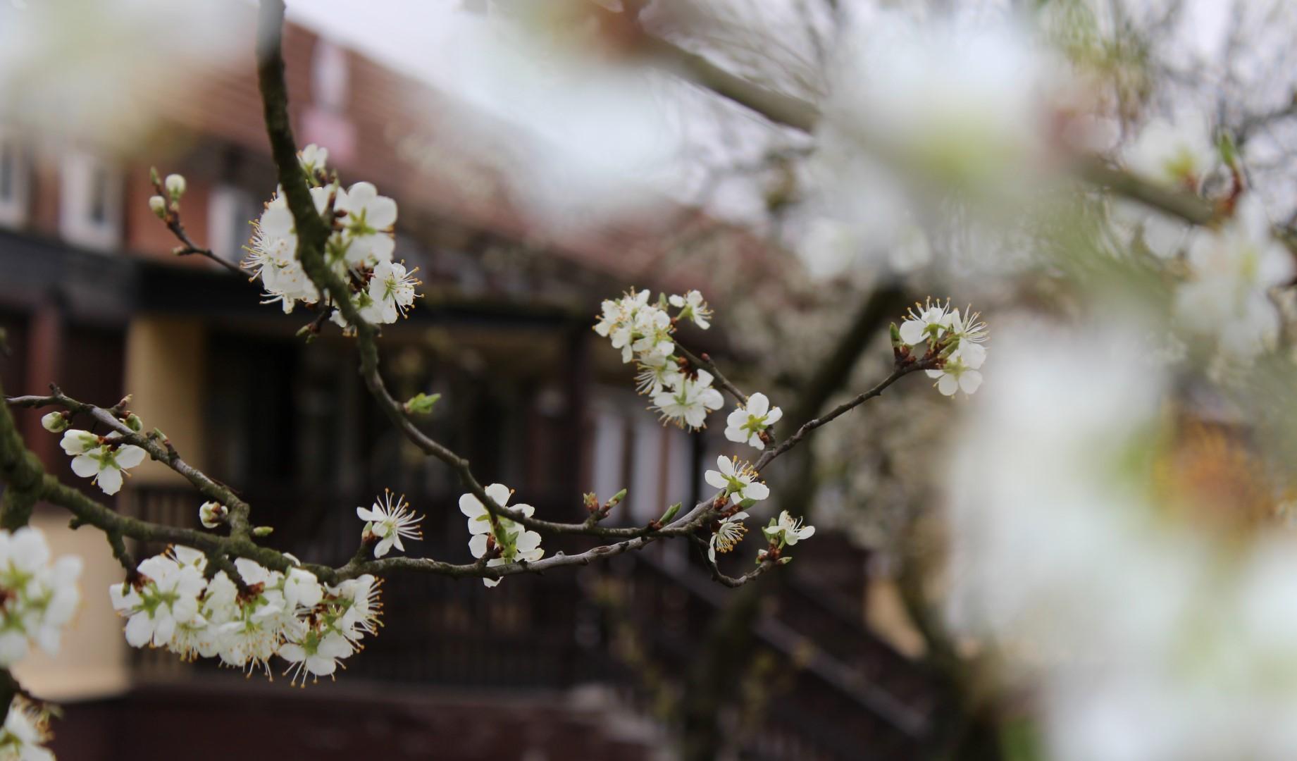 Wiosną w sadzie